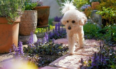 how to keep dogs out of gardens