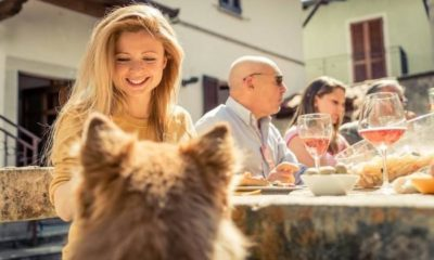 humanization of dog nutrition from two research perspectives