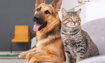 improve pet health and metabolism with a functional ingredient