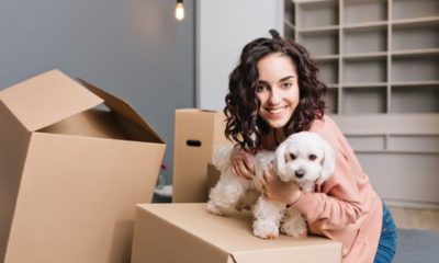 moving with your dog dogster