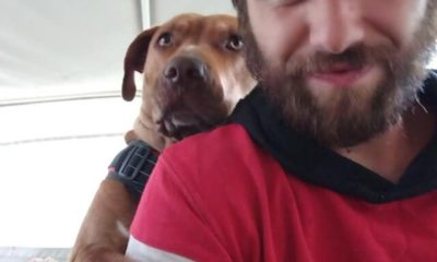 stolen service dog and broken hearted person share beautiful reunion