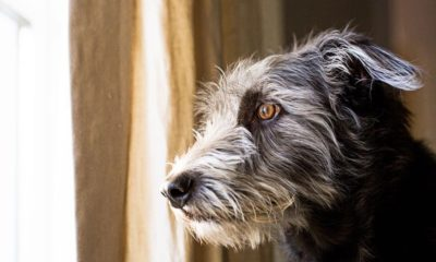 stressed pets: how to keep your dogs relaxed if you