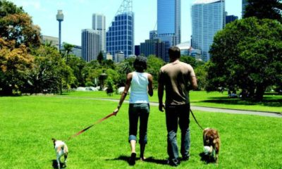 survival tips for dog city life dogster