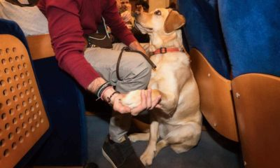 the difference between emotional support vs service animal