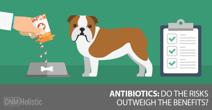 three things dog owners should know about antibiotics