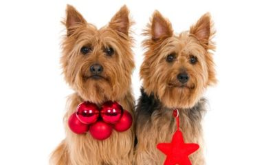 would you clone your dog? dogster