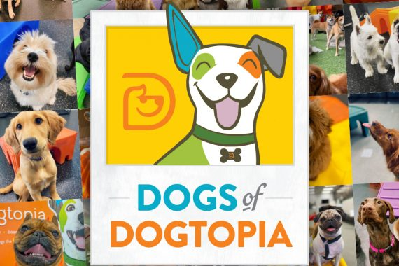 your dog could appear on the dogtopia 2022 calendar