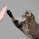 2 reasons for robust pet food m&a activity in 2021
