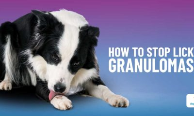 5 steps to heal your dog's lick granuloma