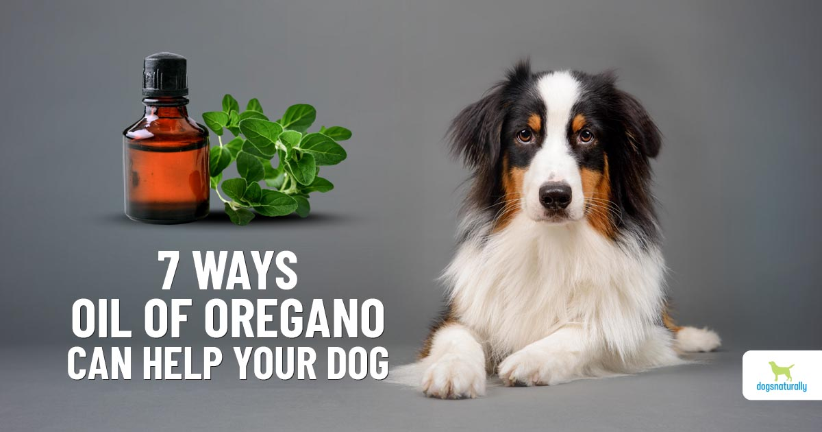 7 ways oregano oil can help your dog