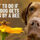 bee sting on the dog? here's what to do