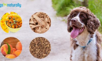 boost your dog's liver to avoid skin problems