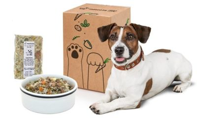 brazilian pet food manufacturer: real food is the real deal