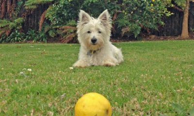 can dogs eat lemons? the best fruits for your dog