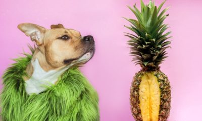 can dogs have pineapples? fruits for puppies