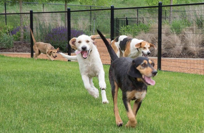 cargill acquires animalbiome pet gut health business