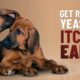 dog ear yeast infections: causes and solutions