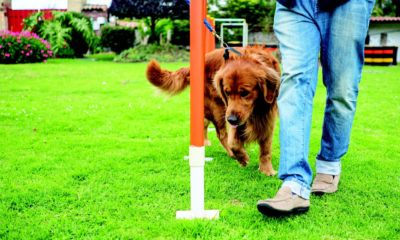 dog sports to build your bond dogster