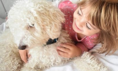 dogs can help children accept the challenges of caring for