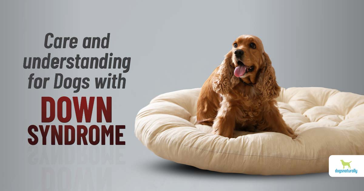 how to care for a down syndrome dog