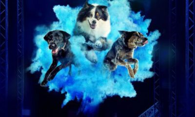 july 2021 dog events and dog holidays dogster