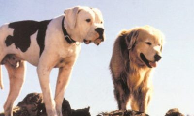 movies your dog wants to see right now dogster