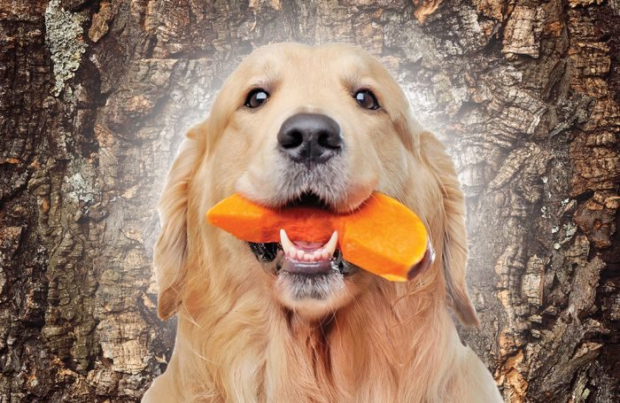 new pet food launches recover, focus on health