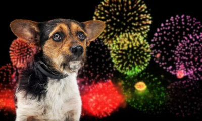 there are low noise fireworks so why aren't we going