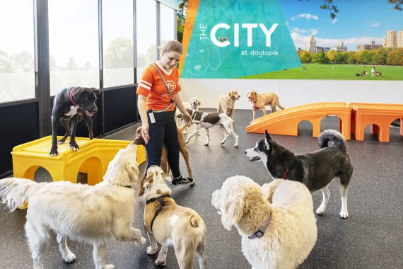 why busy playrooms are good for your dog