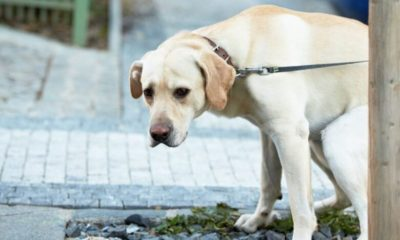 yellow dog poop – the full scoop on your dog's