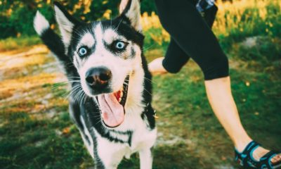 your dog can be the partner you need to stick