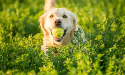 dog food market report and forecast 2021 2026