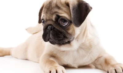 dog food recall: top quality dog food recalled due to