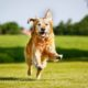 """""""dog cognition does not look exceptional,"""" researchers find"""