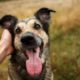 dog owners sent warning as new research claims dry pet