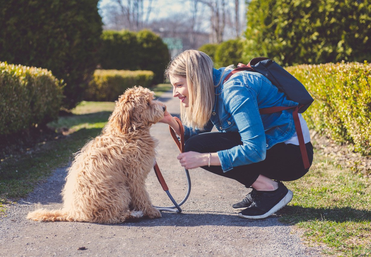 how to find a reliable dog walker