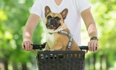 how to take your dog on a bicycle ride