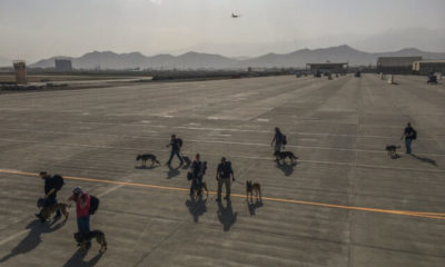 outrage ensues after us military dogs fly out of afghanistan