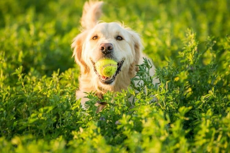 owner of first dog training centre in idukki earns upto