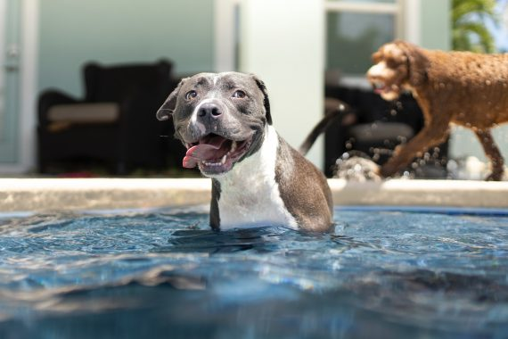 protecting your dog from the summer sun