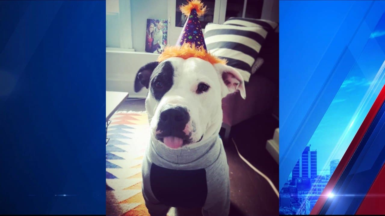 ready to celebrate a 'pawsome' holiday? it's national dog day!