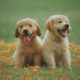 san francisco top dog for canines