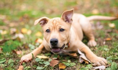 save on dog food, toys and more for national dog