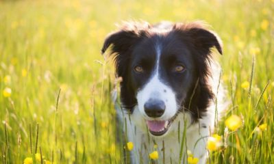 the 10 most intelligent dog breeds, according to scientific study