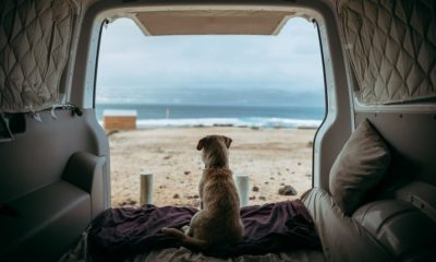 the best dog breeds for every type of traveler