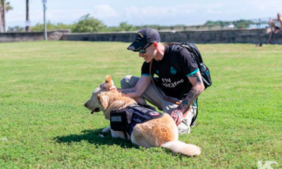 us department of veteran affairs will pay for service dogs