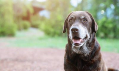 what factors contribute to a dog's longevity?