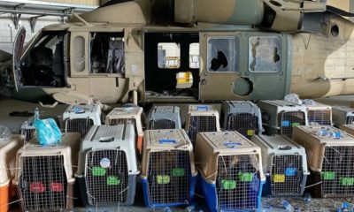 afghanistan military dogs left behind as nonprofit scrambles to save