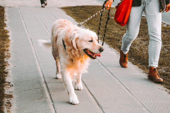 celebrate national pet wellness month: tips to keep your dog