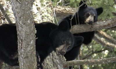 fearless woman defends her dog from black bear